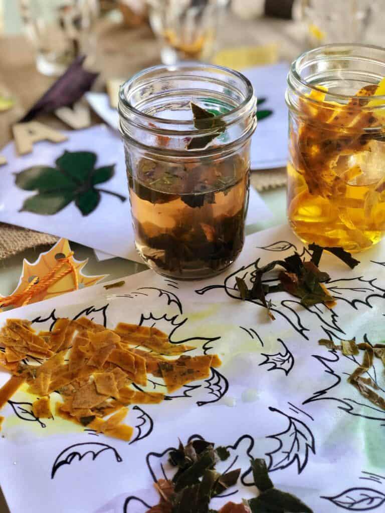 leaves stem experiment