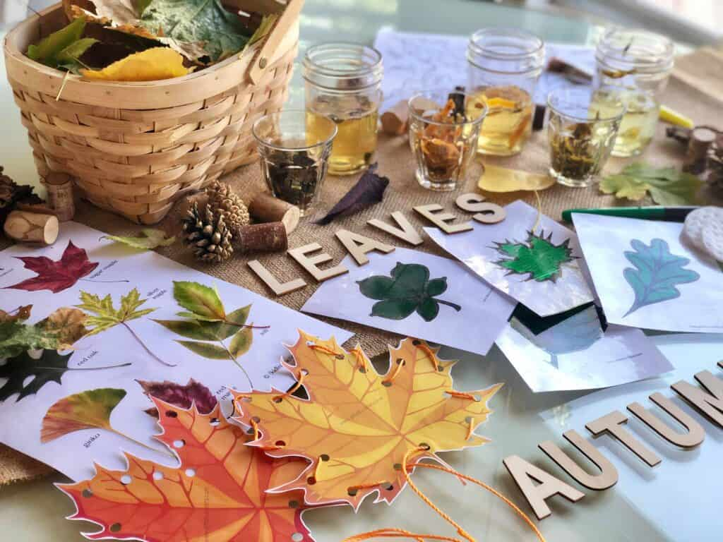 sensory table with changing leaves