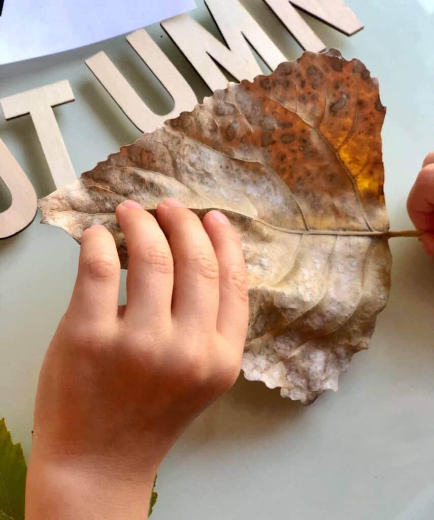 exploring leaves