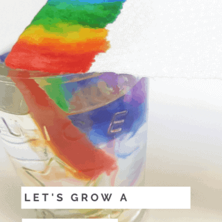 How to grow your own rainbow with kids