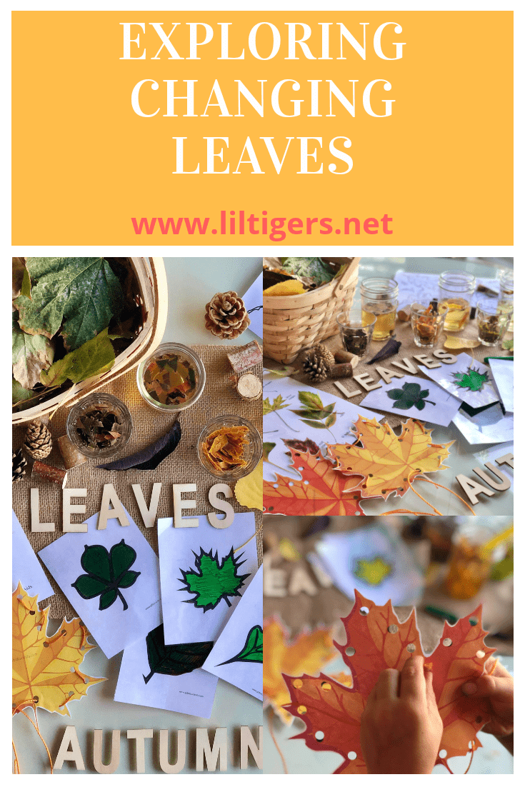 changing leaves activities for kids