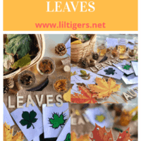 Fun Sensory Play with Changing Leaves Activities for Kids