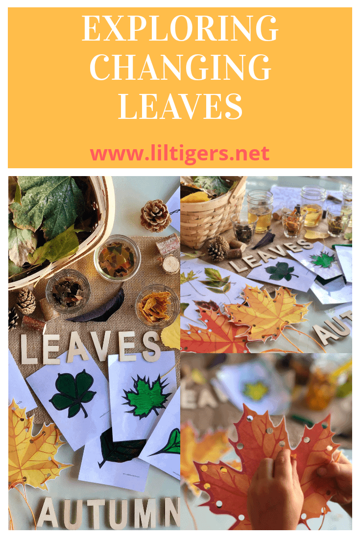 Exploring changing leaves
